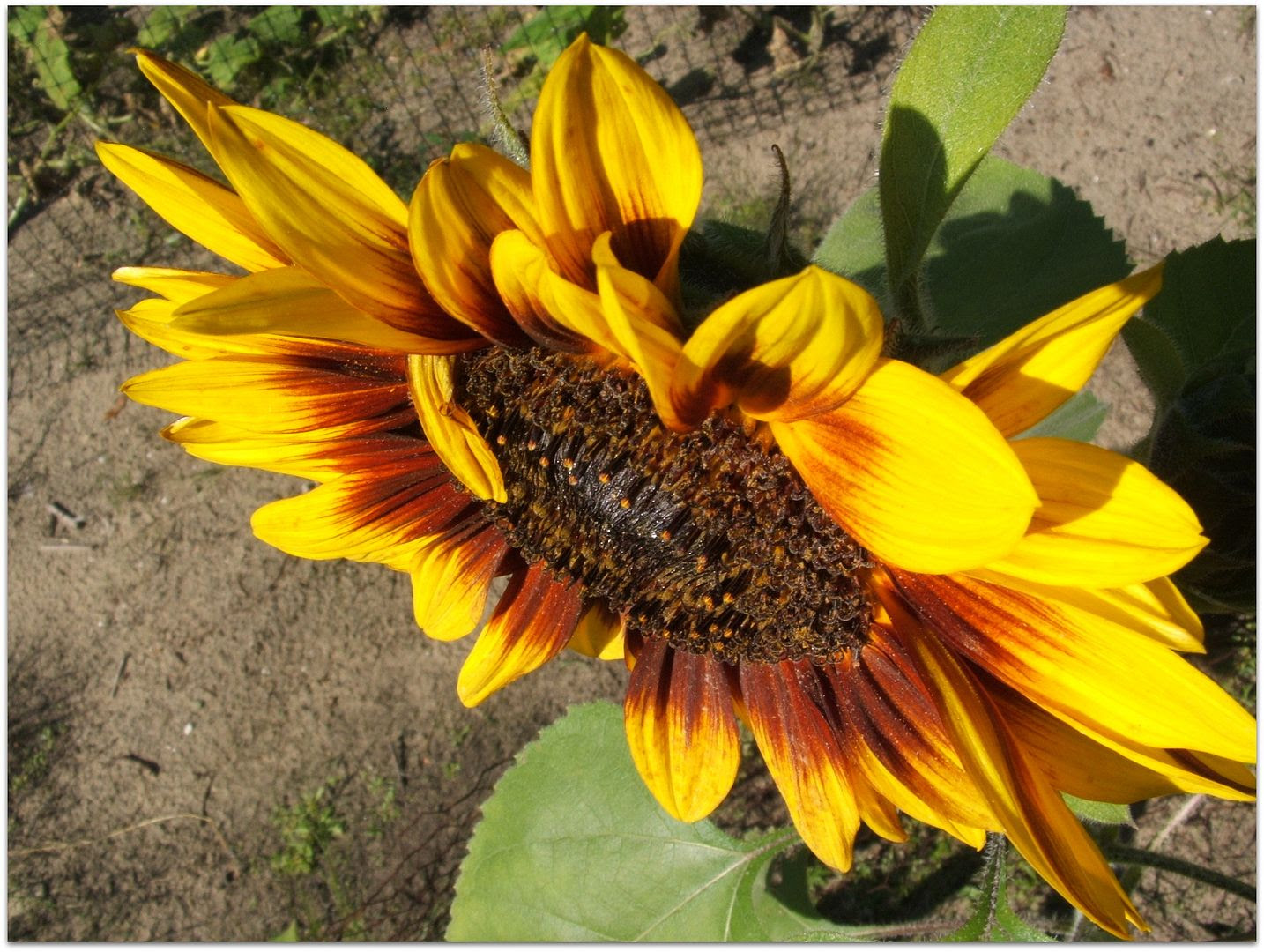 by Angie Ouellette-Tower for http://www.godsgrowinggarden.com/ photo DSCF9033_zpsxapzitqx.jpg