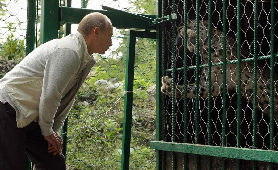 Vladimir Putin at the cage of leopards in the reserve Sochi.