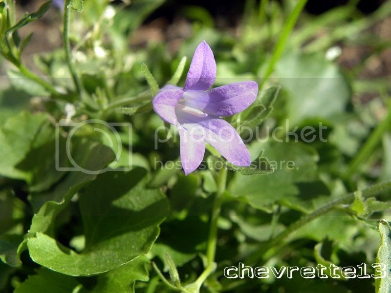 http://i1252.photobucket.com/albums/hh578/chevrette13/communaut/DSCN5535Copier_zpsbc0b3d73.jpg