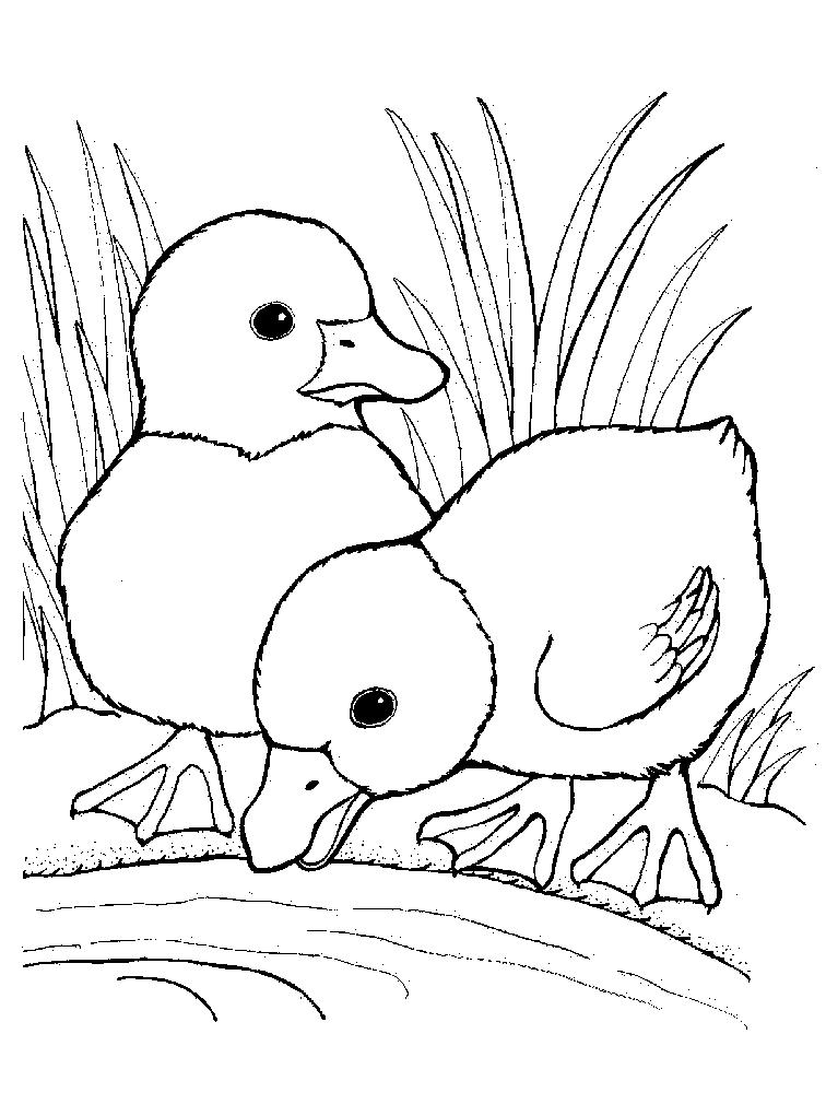 Maestra De Infantil Animales Domésticos Para Colorear Az Dibujos
