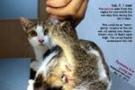 pyometra-cat-female-one-year-pus-vagina-1-month-toapayohvets.jpg