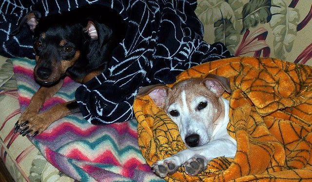 Jujube and Pete snuggling