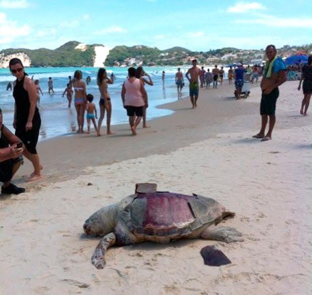 Tartaruga Marinha apareceu na praia de Ponta Negra, cartão postal de Natal (Foto: Sérgio Fraiman)