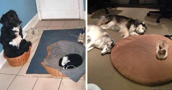 Gatos com sono que não dão a mínima para cães