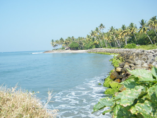 coconut trees at Thirumullavaram beach, Kerala