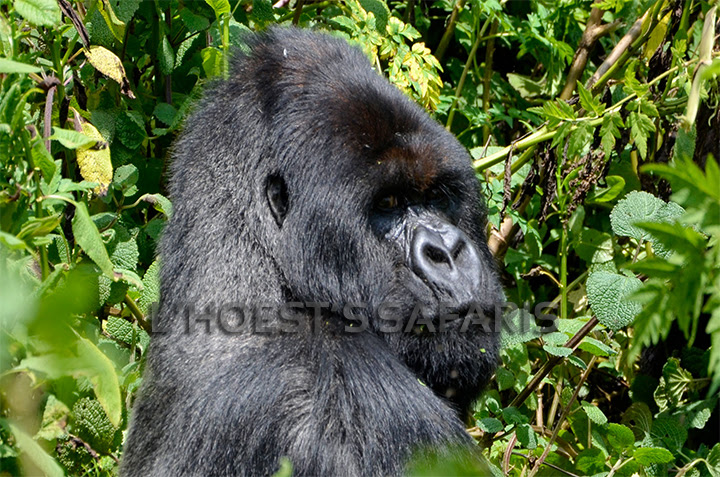 6 days Rwanda Primates and Gorilla Tracking safari