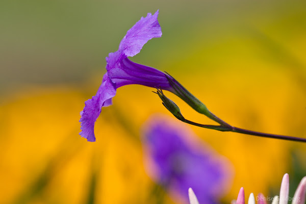 a splash of color, purple against yellow