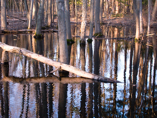 reflections of tree trunks, rippled water