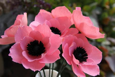 Beautiful Anemone Flower ? WeNeedFun