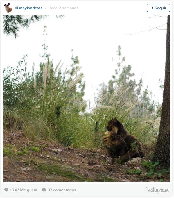 la historia de los gatos de disneyland 15