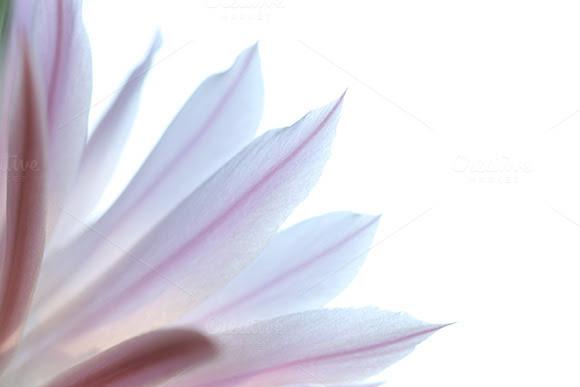 Background  Warna  Soft Pink Designtube Creative Design