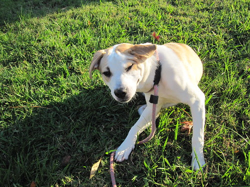 Sierra scratches her ears
