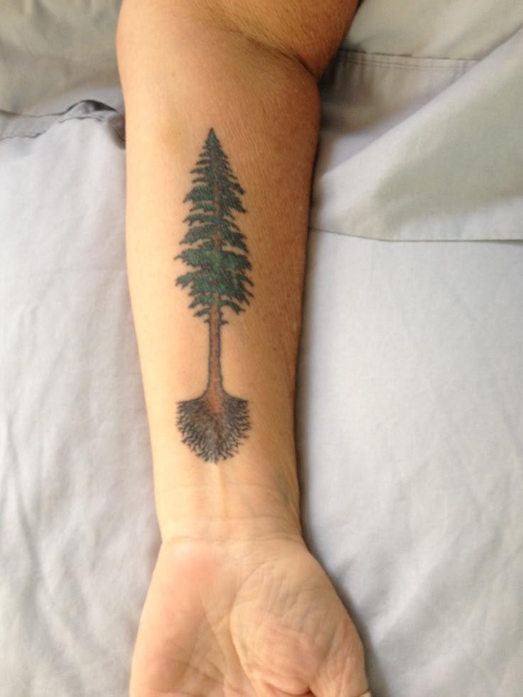 Pictures Of Sequoia Tree Tattoo Kidskunstinfo