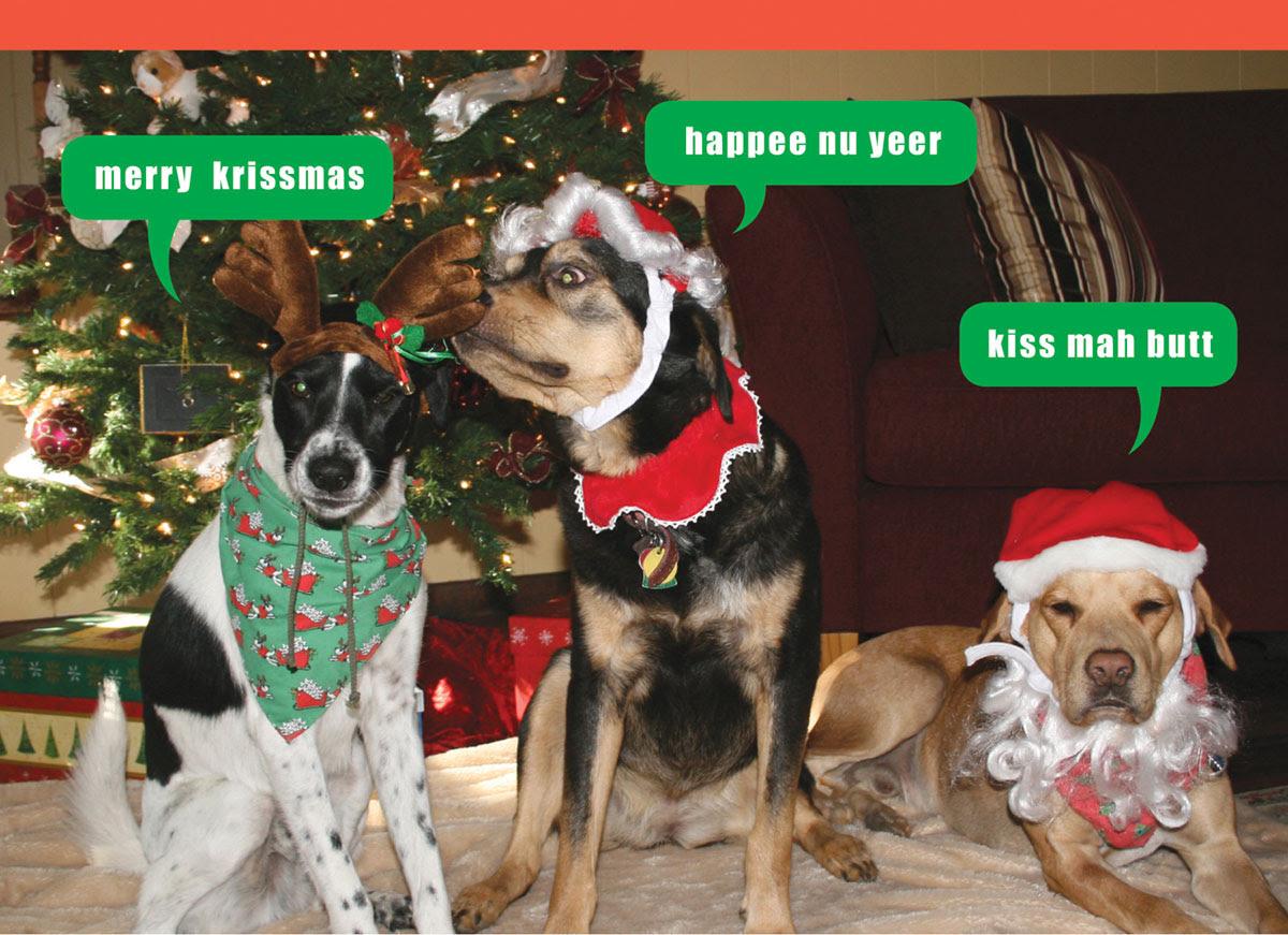 Cute Pet Christmas Wallpaper Pet S Gallery
