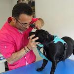 Ahuy | Ahuy : il se prépare à emménager dans sa nouvelle clinique vétérinaire