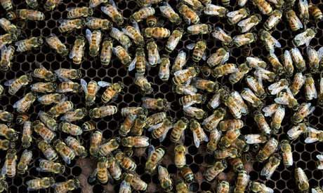 Honey bees walk on a moveable comb hive