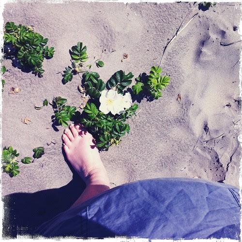 feet :: 2:7 :: blomster