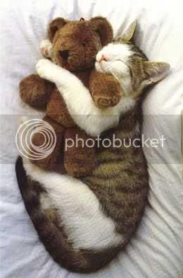kitty's teddy bear