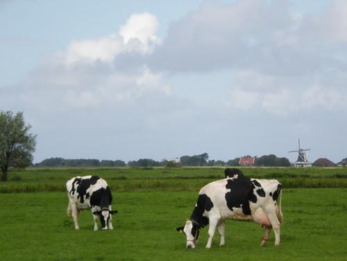 West Frisian Landscape