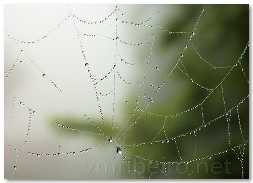 Web drops by VRfoto