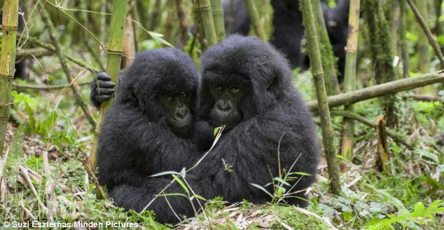 Hold on tight: The big wide world can be a scary place for these brothers