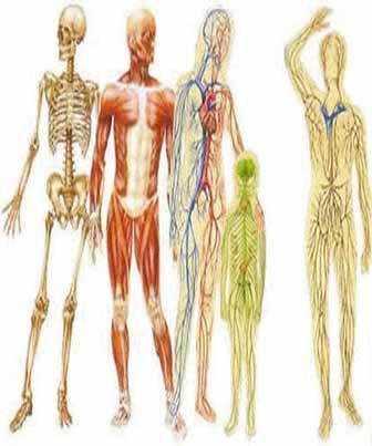 17082012160255o_corpo_humano.jpg