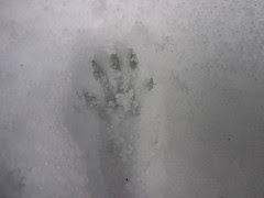 squirrel track