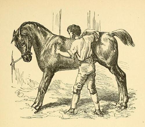 Equus et Equiso