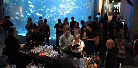 Sharktoberfest NightLife   California Academy Of Sciences