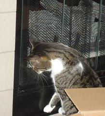 Johnny ponders how to open the glass doors