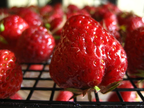 Fresh Strawberry and Ricotta tart
