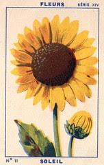 milliat fleurs011