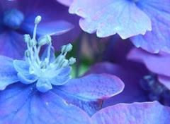blooming inside