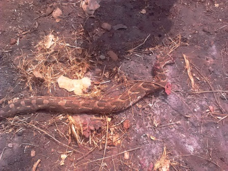Viper Snake Killed Near Corpers' Lodge In Anambra (Photos)