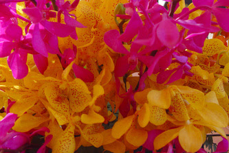 Flowers Photos Royalty Free Images Wallpaper By Design