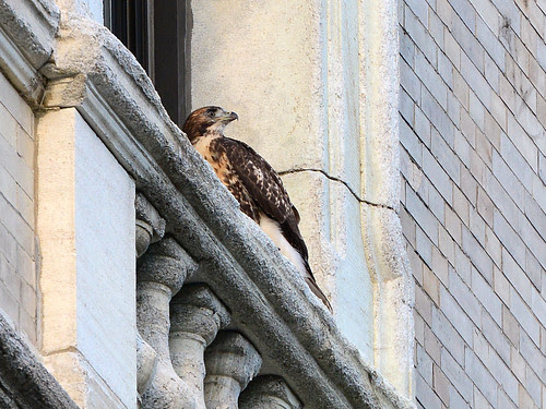 Cathedral Fledge 3