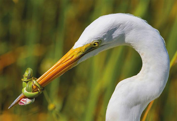 La Batalla Por Jose Garcia, Categoría Comportamiento de Aves EEUU.