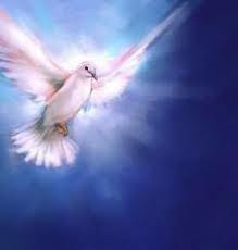 Download 77  Gambar Burung Merpati Roh Kudus  Terbaru Gratis