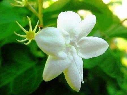 Macam Macam Tanaman Hortikultura versatile blog