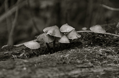 A (mostly) B&W Walk in the Woods