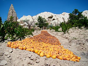 Looking almost like a carpet, apricots are nea...