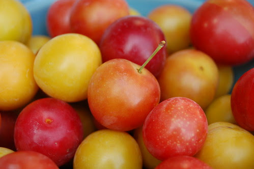 Close Up of Bowl of Foraged Plums by Eve Fox copyright 2009