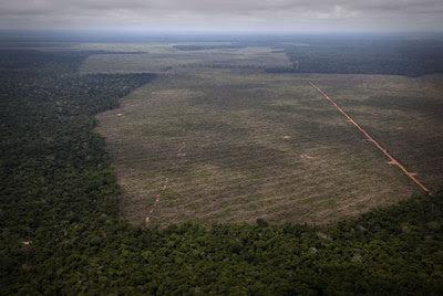 Un ejemplo de deforestación reciente para cultivar