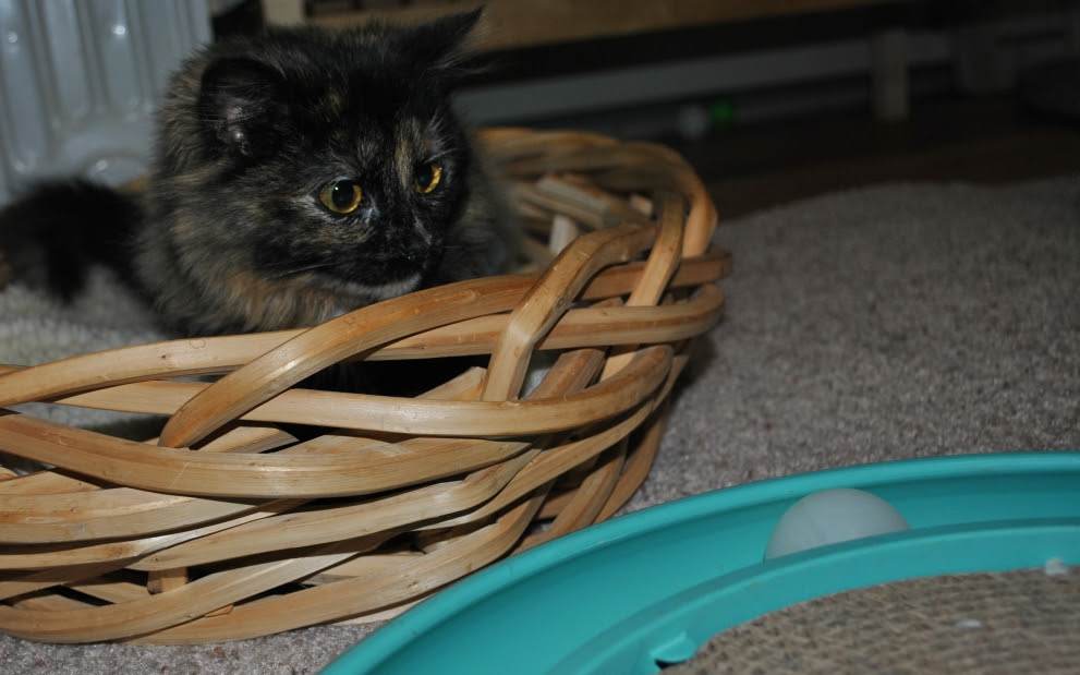 Charlotte in her Basket of Safety looking at the Turbo Scratcher
