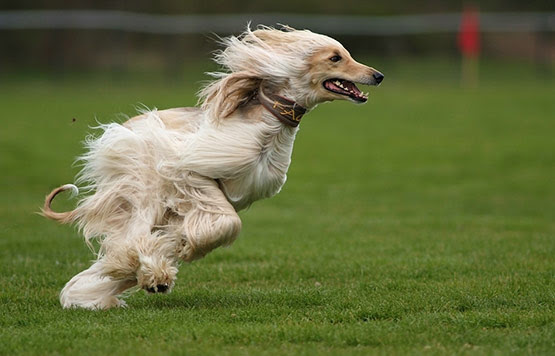 08 The Wind Animal Photography in 20 Examples of Perfectly Timed Animal Photography