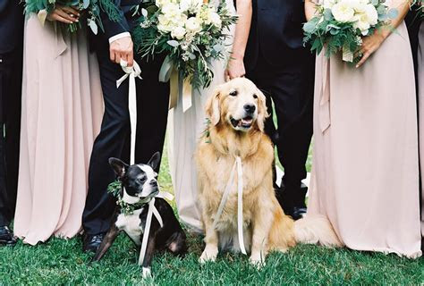 How to Include Dogs in Weddings (With Cute Photos