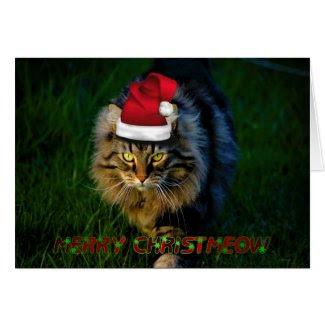 Christmas card xmas Christmas animal kitty cat