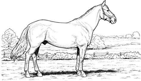 Ausmalbilder Pferde Schleich Kostenlose Malvorlagen Ideen
