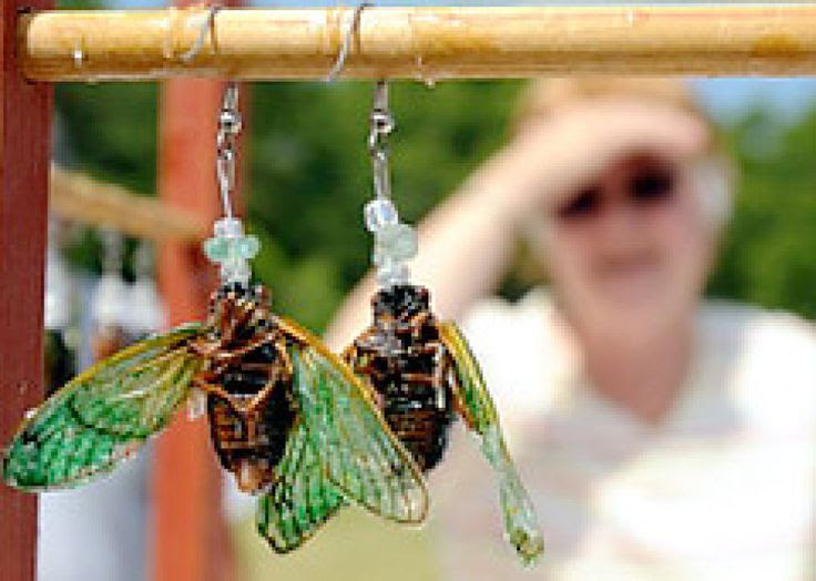 Two teenage girls have made a business out of selling dead bugs.