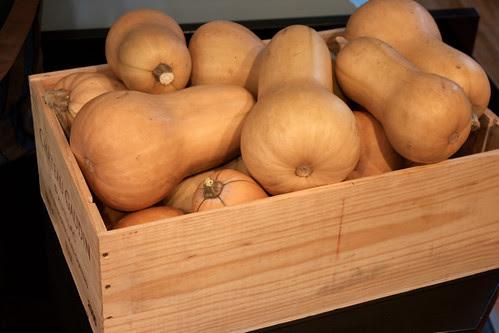 butternut squash harvest